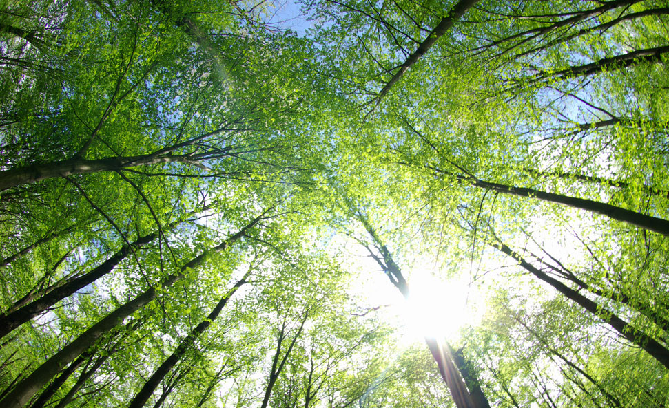 [Revue de presse] Energie et Environnement – Octobre 2020