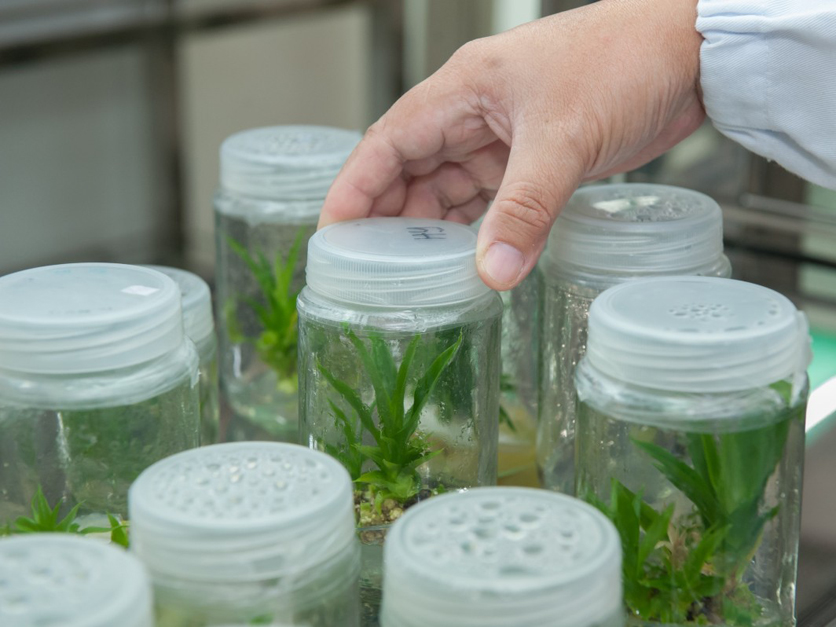 plant_biotechnology_research