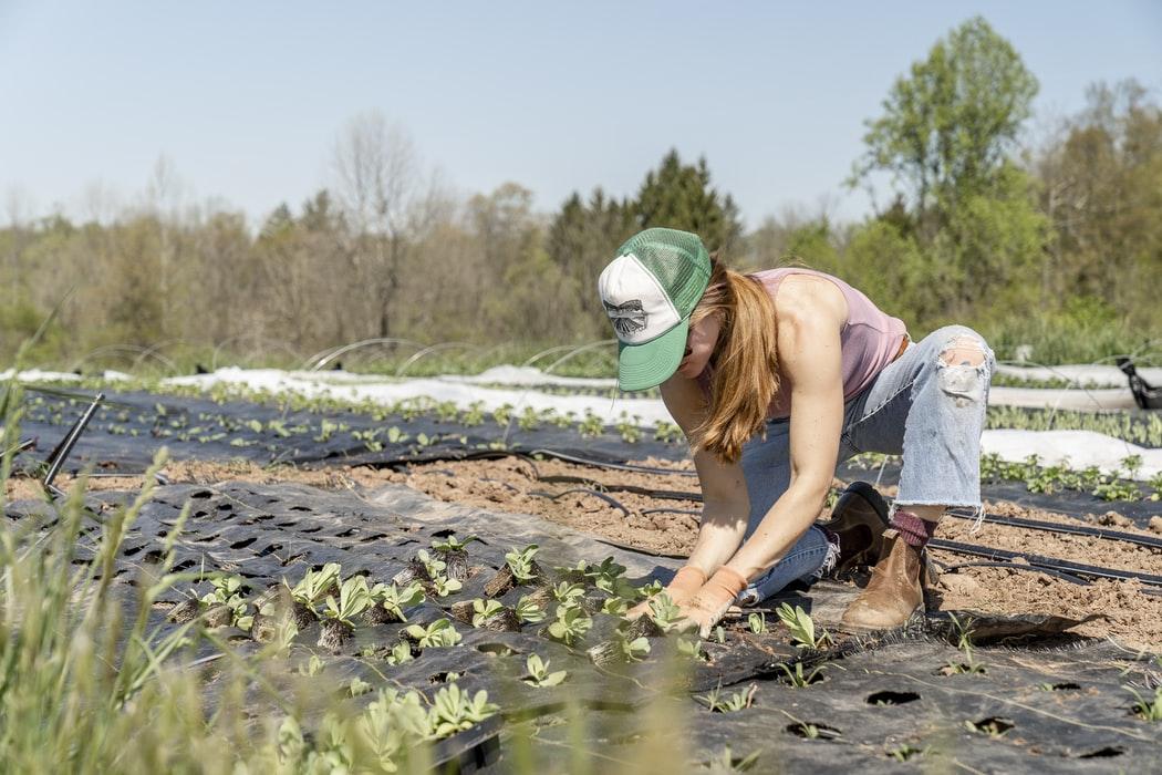 La NIFA investit 20 millions de dollars dans la recherche en agriculture biologique