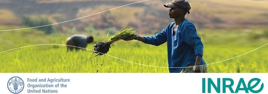 Les bureaux nord-américains INRAE et FAO co-organisent une discussion inédite sur l'intégration systématique des enjeux biodiversité en agriculture